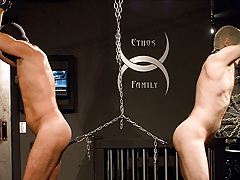 Sir likes balls.  They're enjoy puppies who enjoy a game of tug of war, it's exclusively that the boys they are attached to don't seem to agree.  Stuck betwixt the disgust of the ball stretchers tugging on their jewels and their arms bound above the boys  mature gay